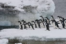 meet all 6 antarctic penguin species
