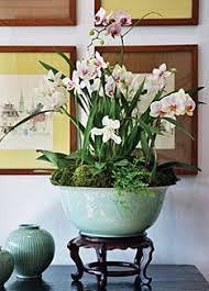 Indoor Plant Arrangements 45 Best Orchid Arrangements Images On Pinterest Orchid