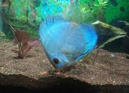 suyash aquarium ratnagiri service provider of various types of