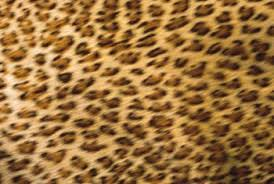 cheetah bedroom ideas bedroom decorating ideas using cheetah home guides sf gate