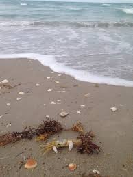 Jensen Beach Florida Map by Jensen Beach Jensen Beach Florida Crab On The Sand
