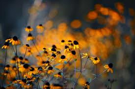 fotos para fondo de pantalla facebook imágenes de flores en hd para fondos de pantalla fotos o imágenes