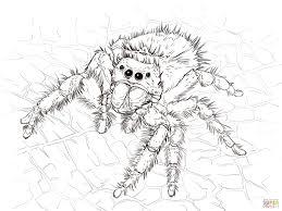 tarantula coloring page hairy legged tarantula coloring page for