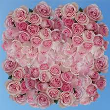 global roses roses soft pink flowers online global