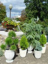 evergreens make up a whole pot garden in this display at bartholdi