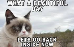 Grumpy Cat Snow Meme - pennsylvania weather as told by your favorite memes