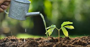 tips on watering newly planted trees the woodsman tree service