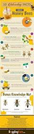the adventures of hutch the honeybee 87 best images about birds u0026 the bees on pinterest chicken