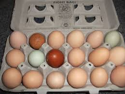 what breed of maran lays the darkest egg this is what i got today