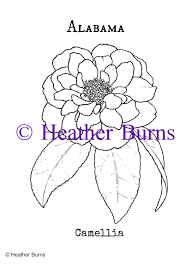 alabama state flower camellia coloring page alabama flower and
