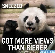 Funny Panda Memes - panda memes omg cute things funny memes pinterest panda