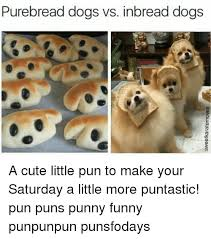 Dog Pun Meme - pure bread dogs vs inbread dogs a cute little pun to make your