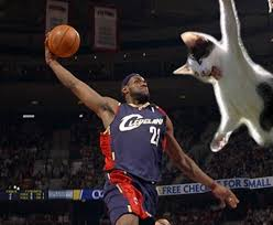 Funny Basketball Memes - basketball cat meme cat planet cat planet