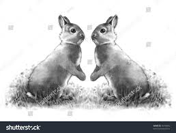 pencil drawing two cute bunnies face stock illustration 76199893