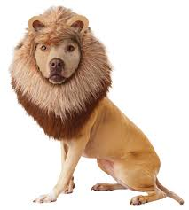 lion dog costume dog costumes this would be cute on my german