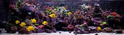 sb reef lights review aquarium saltwater marine basics