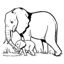 elephant netart