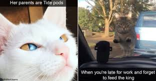 Funny Cats Memes - 20 funny cat memes to make your day a little brighter awkward com