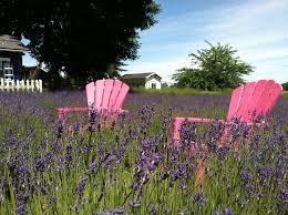 the beautiful lavender farm hiding in plain sight in portland that