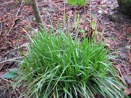 ornamental grass types for your gardens and landscape garden