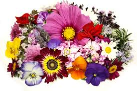 flowers images quality flower images wallpapers wallpapers