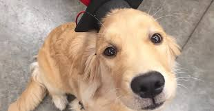 dog graduation cap inbox puppy page 2 of 2 your daily dose of cuteness