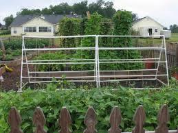 build a garden trellis build a simple garden trellis out of pvc pipe pvc pipe diy projects