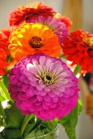 Summer Flower Garden Ideas - 56 best flowers to cut images on pinterest beautiful flowers