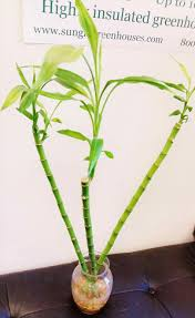 Top Indoor Plants Top Tropical Any One Can The House Shade Loving Indoor Plants