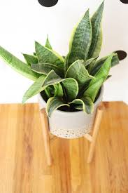 the 25 best wooden plant stands ideas on pinterest wooden plant