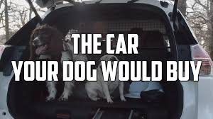 maserati houston rich kid uses puppy to polish maserati as internet howls autoblog