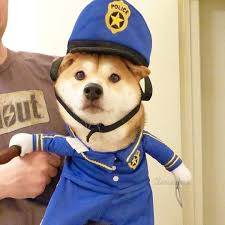 the most popular dog costumes popsugar pets police dog halloween costume funny halloween dogs pinterest