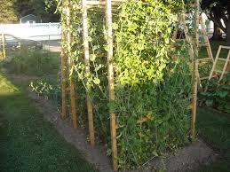 summer garden update u2013 6 23 12 the year round harvest