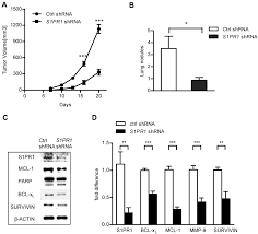 s1pr1 is an effective target to block stat3 signaling in activated