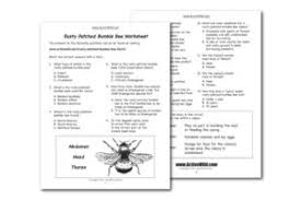 rusty patched bumble bee facts for kids students u0026 adults