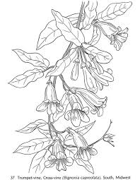 vine coloring pages adults coloring