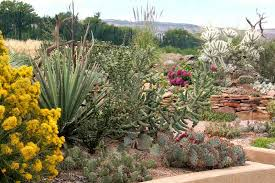 Colorado Botanical Gardens Club Demonstration Gardens Chinle Cactus Succulent Society