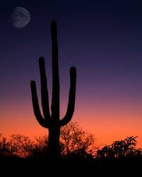 arizona photographers arizona photography a webring that has any type of nature and