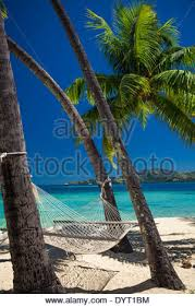 tropical paradise hammock between palm trees at the seaside on a