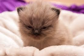 Cute Kitten Memes - cute kitten meme meme rewards