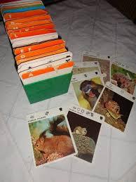wildlife treasury cards 708 best souvenirs souvenirs images on