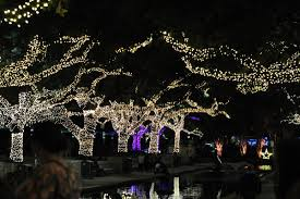zoo lights houston prices beat the crowds save money at houston s favorite zoo lights