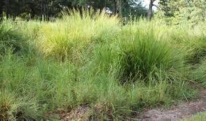 native prairie plants points of interest hermann park conservancy