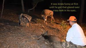 Deer Hunting Memes - colorado mule deer hunt and buck attack youtube