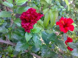 Different Types Of Garden Plants Why Is There Different Types Of Flowers In The Same Branch Of