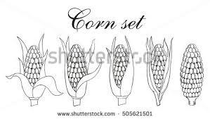 hand getrokken maïs vector download gratis vectorkunst
