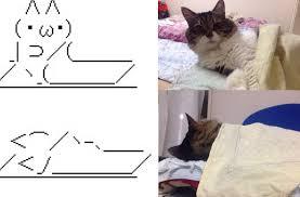 Sleeping Cat Meme - ascii cat vs real cat cats know your meme