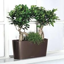 oversized modern planters tags large modern planter ceramic