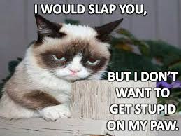Mean Cat Memes - 17 best mean kitty images on pinterest grumpy cat quotes