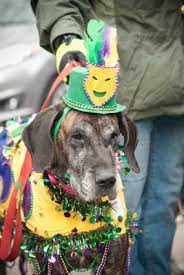 mardi gras pet collar fleurty 1510 best mardi gras images on carnivals dog crafts and
